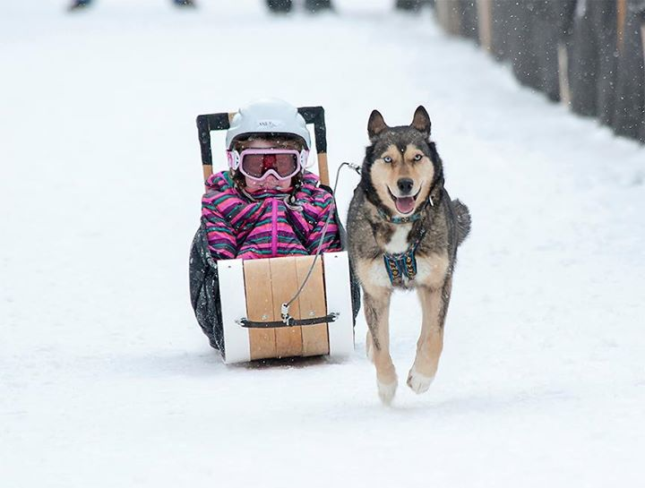 Canmore Kid N Mutt Races