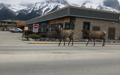 Welcome to a New Main Street Canmore